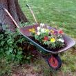 Rusty Old Wheelbarrow Planter
