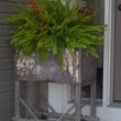 This is a wonderful cart I purchased at a store in Rogers, MN called the Vintage Cupboard. It is one of my favorites and Karen, the owner, is awesome! Im not sure what the cart was used for but its great by my front door. I love it filled with ferns and I added bittersweet for a punch of color.