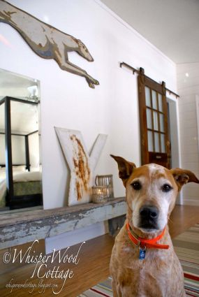 This room has definitely gone to the dogs...in a good way. Inspired by Tanner, my beloved Red Heeler mix (rescued as a pup from an animal shelter in Texas), a few special pieces were added to this wall in our recent master bedroom makeover.