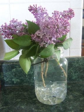 nothing better than fresh-cut lilacs in a mason jar for a simple and sweet-smelling display