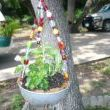 So here is my little creation of my beaded planter, and a hanging one at that too.  Added beads to create this adorable hanging basket