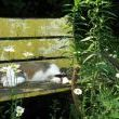 Nothing says country like a kitty catching a few rays on a garden bench!