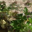gourd plant loves the new trellis-had to shrink pic so I could post, lost a lot of the mattress springs all rusty