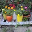 This is another auction find.  The childs toy baby bed makes a great display for my container flowers.
