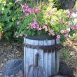 Cider Press Planter
