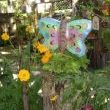 A garage sale Butterfly thats made as a candle holder looks at home with my 5 foot cosmos..