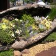 Otten Bros. will be providing the greens and other cool new products. Fairy gardens (this one created by yours truly) are as hot as ever. Otten Bros. will have everything to create one of your very own. If you like terrarium gardening ...youll love what you see!