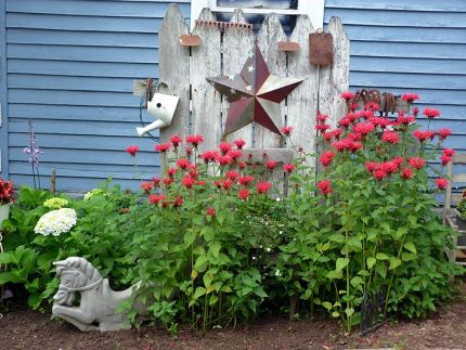 Every year I make this the focal point in my yard.  The bee balm is beautiful this year; hydrangea to the left.  The backdrop is a piece of a very old fence.  The miscelaneous ornaments are old garden tools and horse shoes I have gathered up throughout the  property.  I painted the barn star a few years ago and it is now the rustic look I wanted.  I bought the aluminum spring horse at auction.
