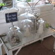 This junk table is ab fab and Lanette did a wonderful job keeping the decorations simple and elegant.