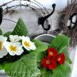 But since spring is upon us, live blooms in galvanized mini buckets alongside a barbed wire wreath make it so indoors as well.  No worries, the wreath is WELL above where a head would rest. (I checked)