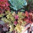 Gorgeous Fall plants add the crowning touch!! Just look at the color!!!