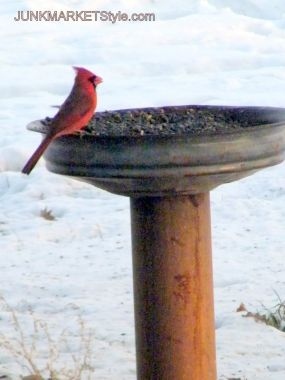 Look at happy Mr. Cardinal. He is enjoying a nice little snack and a gorgeous view. I used the base of a turkey feeder for the bowl after removing the cage like top. Tip: Always check to make sure your basin of choce is water tight before proceeding with your project. If it is not a product called galvenized patch may help you out!