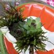 I planted them with succulents and moss. They would be adorable take aways for your guests.