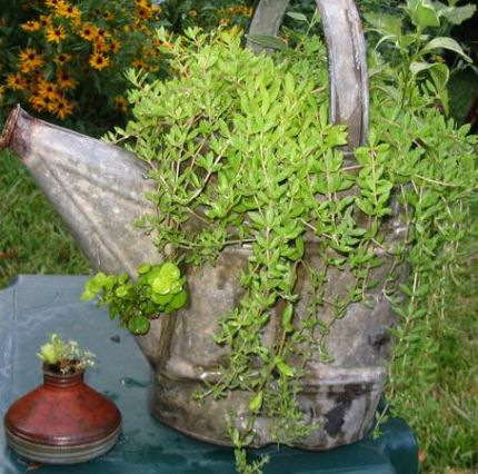 Vintage watering can planter.