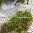 Nothing says garden like bluff country moss. I go for walks and pick it fresh from the bluffs.