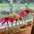 This test tube and tray works well for close scientific examination of my favorite flowers, zinnas.