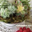 How to Create a Succulent Centerpiece, JUNKMARKET Style