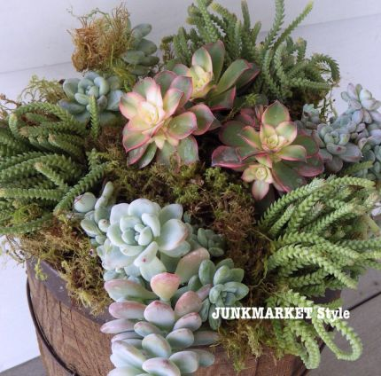 Succulents are super easy to care for and great for your outdoor enjoyment.