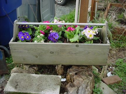 Spring time- I dont know where mom found this old wooden tool box but what a great planter!